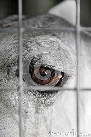 Prisoner animal