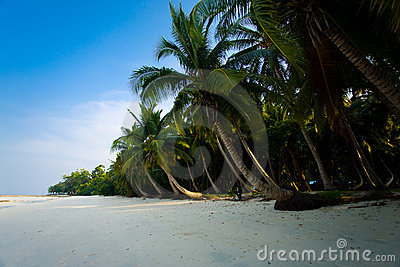 Pristine Empty Palm-Lined Beach