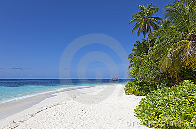 Pristine white sand beach and palm trees