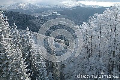 Pristine winter scenery