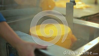 Proceso de empaquetado del queso Comida de la producción Proceso de fabricación de la quesería almacen de video