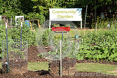 Produce Growing in Community Garden