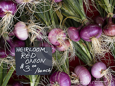 Produce - organic red onions background