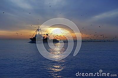 Professional fishing boat seagull sunrise