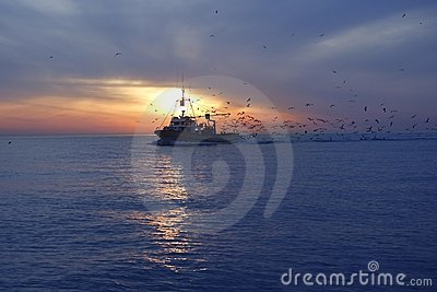 Professional fishing boat seagull on sunset
