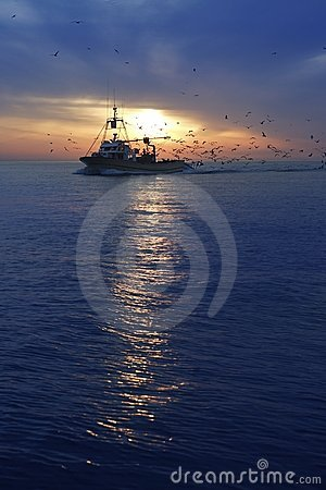 Free Professional Fishing Boat Seagull Sunset Sunrise Royalty Free Stock Photo - 14560575