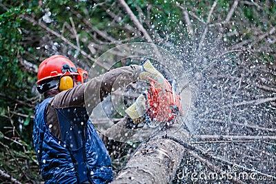Professional Lumberjack Cutting a big Tree
