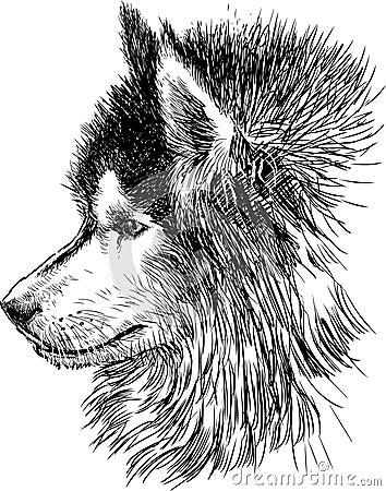 Profil av en hund
