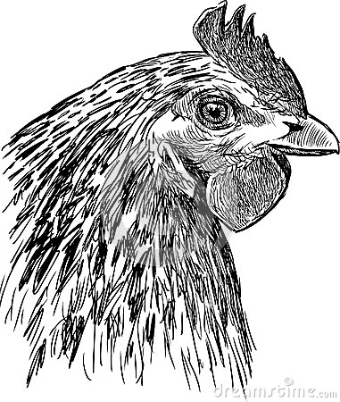 Profile of a hen