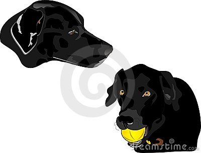 Profile illustration of Black Labrador retreivers