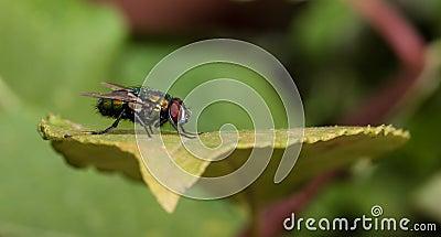 Profile Macro of fly on leaf