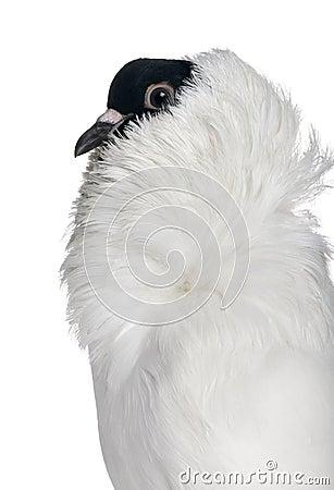 Free Profile Of German Helmet Royalty Free Stock Photography - 13665427