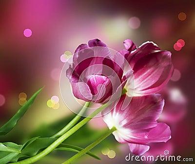Projekta kwiatu tulipany