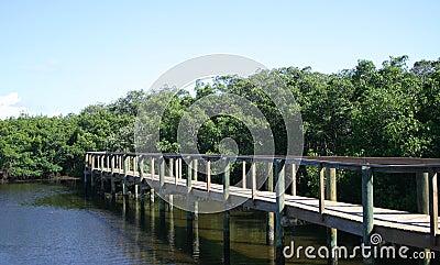 Promenade durch die Mangroven