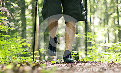 Promenade par la forêt