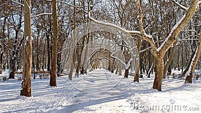 Promenade under the sycamore trees