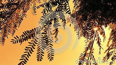 Promienie słoneczne przelatujące przez liście na drzewie zbiory wideo