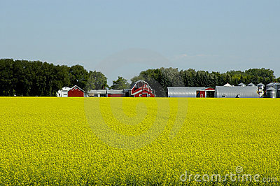 Prosperous Farm