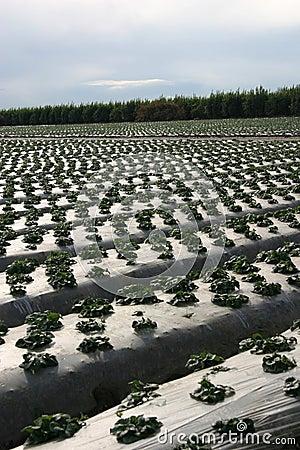 Protección de la pista de granja