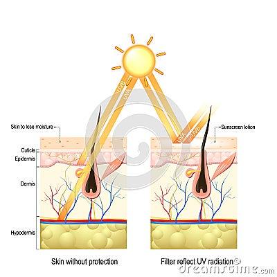 Protect human skin from UVA , UVB ray Vector Illustration