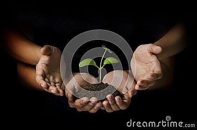 Protecting sapling