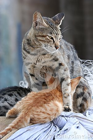 Protective cat