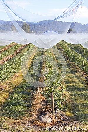 Protective Fruit Netting