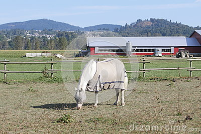 Protective Gear for Horse