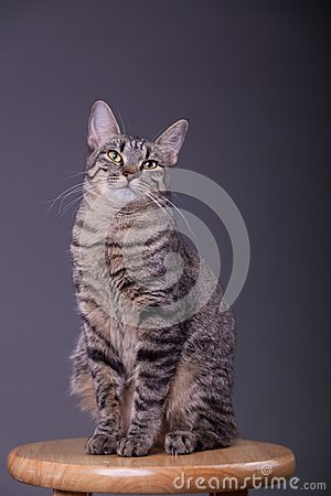Free Proud Confident House Cat Posing Royalty Free Stock Photo - 109673785