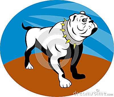 Proud English bulldog