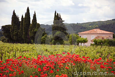 At the Provence