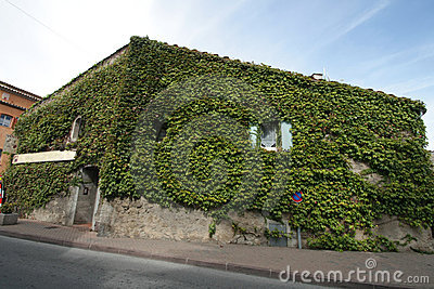 Provence s house  covered by plants