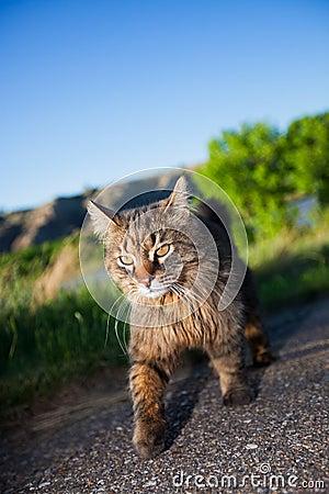 Prowling Hunter