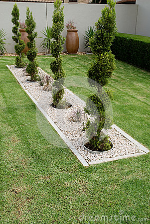 Pruned Conifer Shrubs Stock Photo Image 37641640