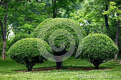 Pruned holly