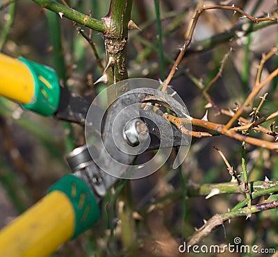 Free Pruning. Stock Photos - 53914303