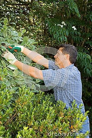 Free Pruning Gardener Stock Photo - 916210