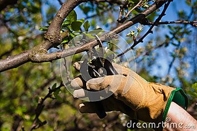 Pruning, Gardening