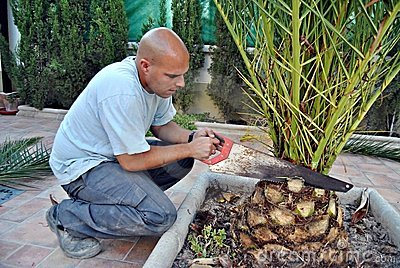 Pruning a Palm
