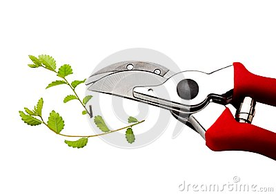 Pruning shears pruning plant