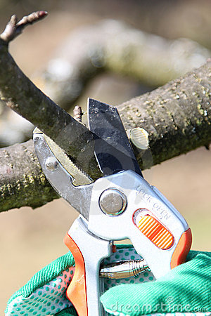 Free Pruning Twigs And Branches Stock Images - 13270634