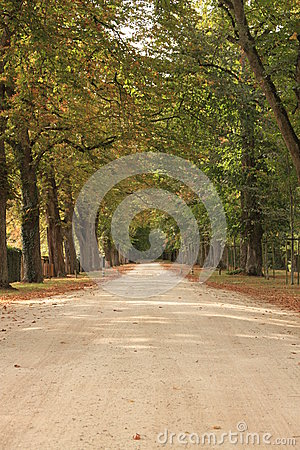 Przez lasu jesień ścieżka