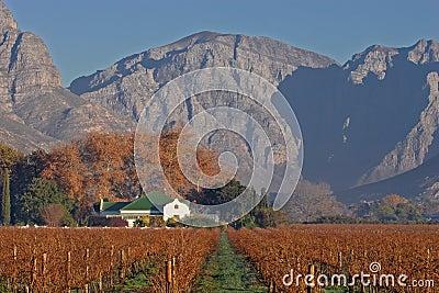 Przylądek afryce południowej strefy miasta winnica krajobrazu