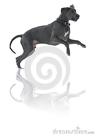 Psa grającego w