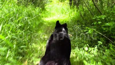 Psi bieg Przez lasu zdjęcie wideo