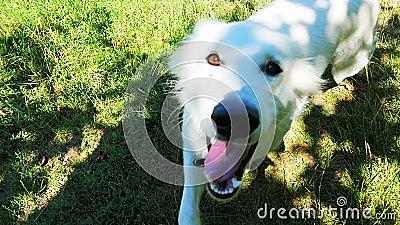 Psi bieg w trawie