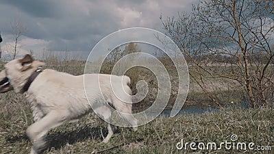 Psi nadchodzący out od wody zbiory wideo