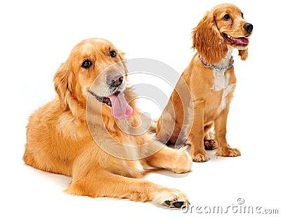 Psi szczeniak