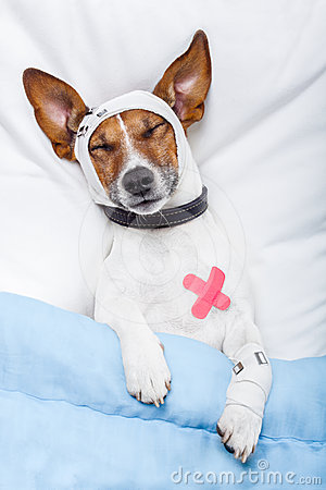 Psia choroba