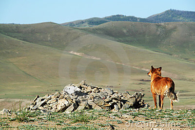 Psia gapiowska dolina